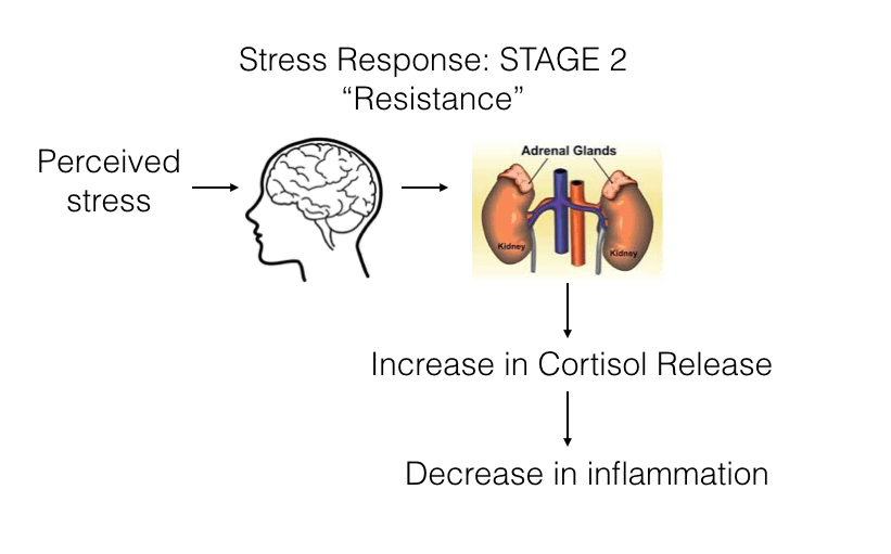 Stress-Respone-Stage2-Annex-Naturopathic-Clinic-Toronto-Naturopathic-Doctor-in-the-Annex.jpg