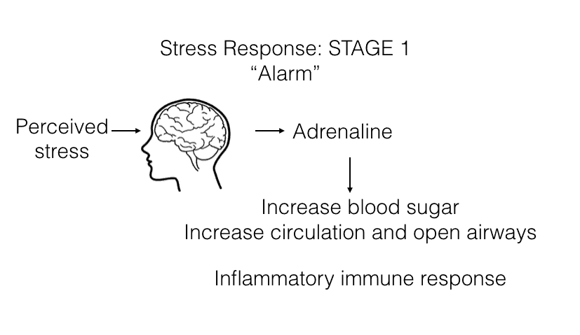 Stress-Response-Stage1-Annex-Naturopathic-Clinic-Toronto-Naturopathic-Doctor-in-the-Annex.jpg