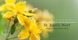 St. John's Wort   Annex Naturopathic Clinic   Toronto Naturopath