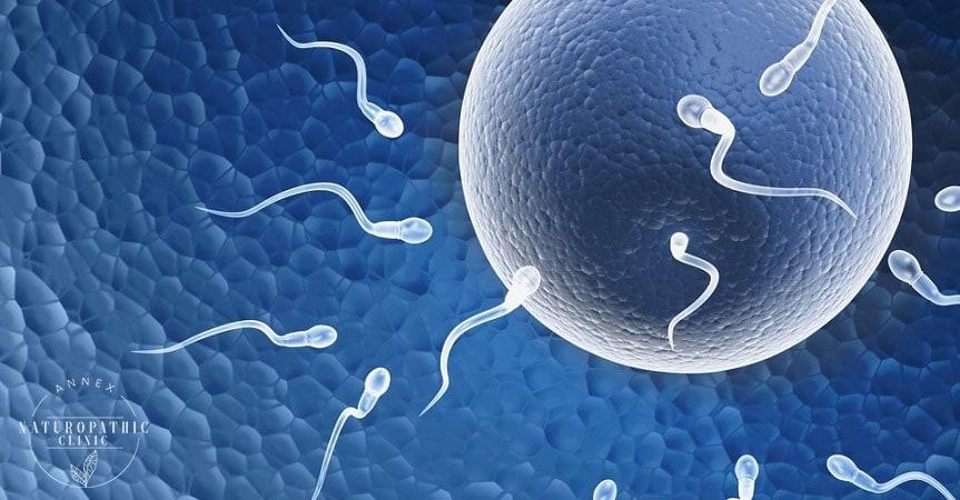 Optimizing Fertility   Annex Naturopathic Clinic   Toronto Naturopath