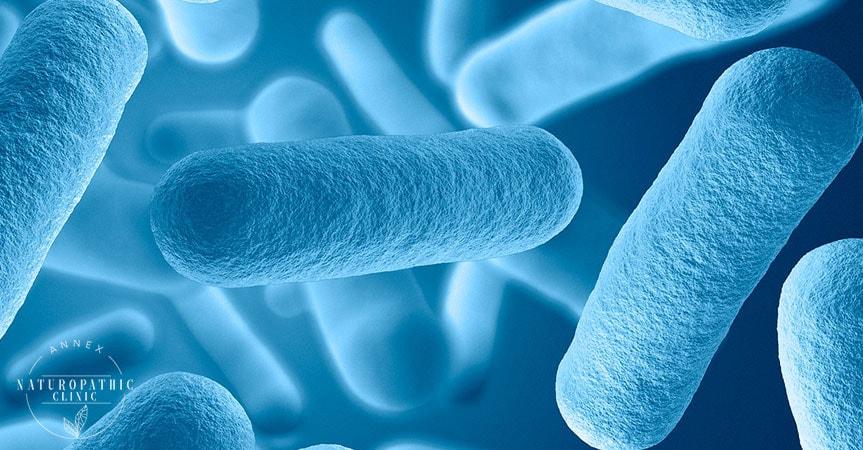 Our Microbiota image | Annex Naturopathic Clinic | Toronto Naturopathic Doctors