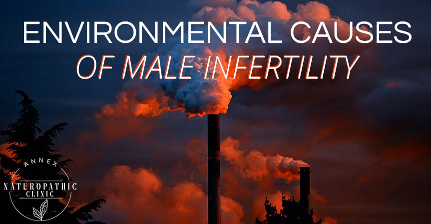 Enviromental Causes Of Male Infertility | Annex Naturopathic Clinic | Toronto Naturopathic Doctors