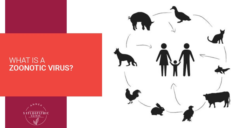 What Is A Zoonotic Virus?