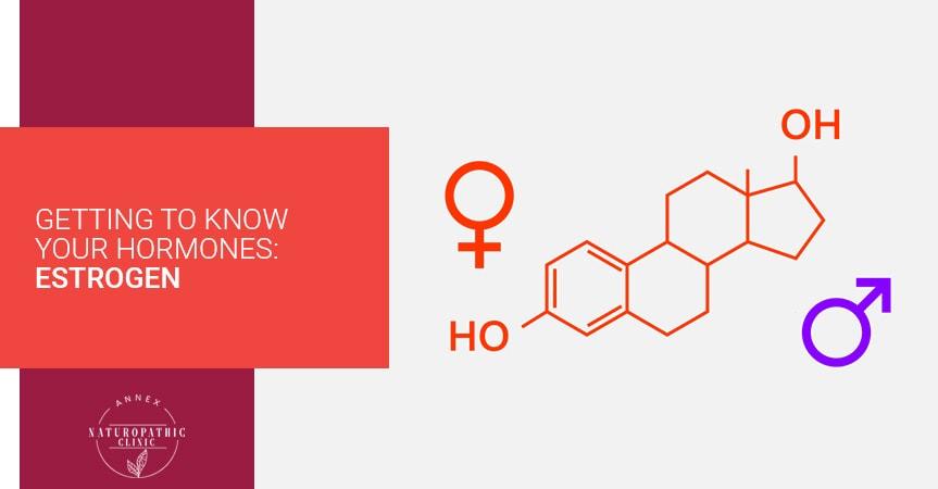 Getting To Know Your Hormones: Estrogen | Annex Naturopathic Clinic | Toronto Naturopathic Doctors