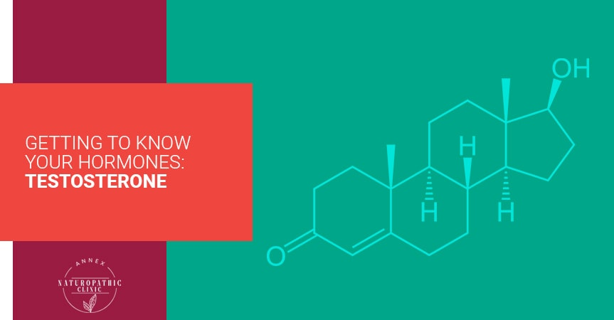 Getting To Know Your Hormones: Testosterone | Annex Naturopathic Clinic | Toronto Naturopathic Doctors