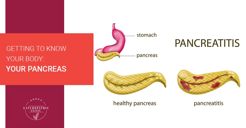 Getting To Know Your Body: Your Pancreas | Annex Naturopathic Clinic | Toronto Naturopathic Doctors